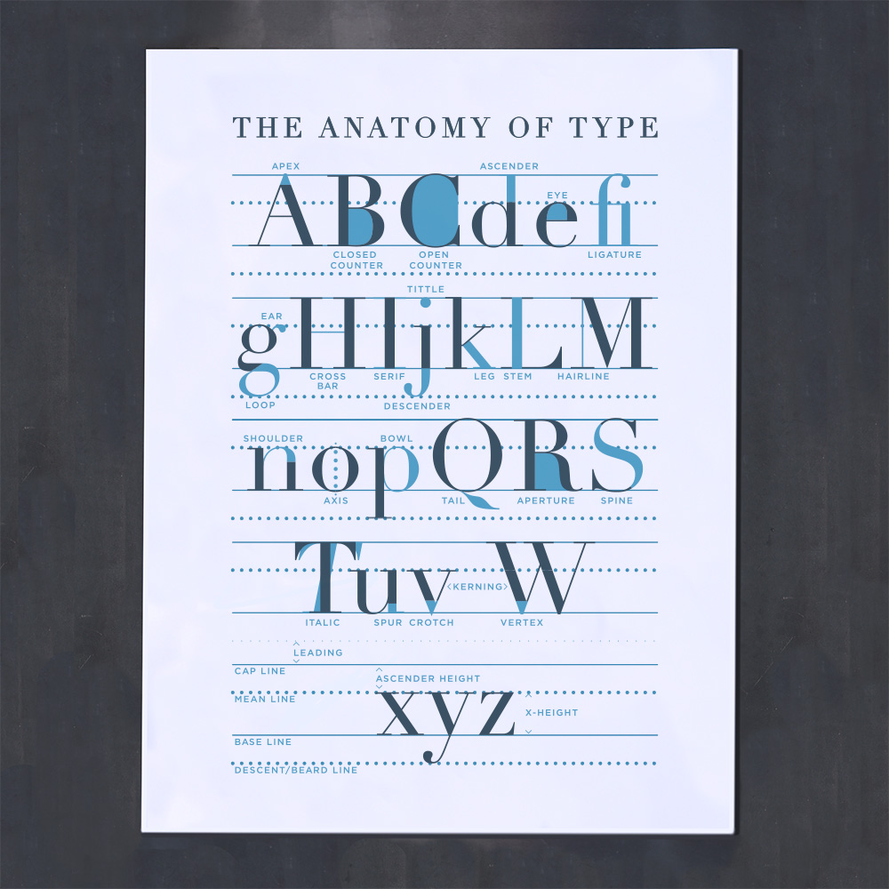blue grey typographic anatomy poster